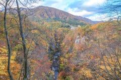 Leaves turning color in autumn in Naruko Gorge - Osaki, Miyagi, Japan royalty free stock image