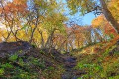 Leaves turning color in autumn in Naruko Gorge - Osaki, Miyagi, Japan royalty free stock photos