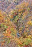 Leaves turning color in autumn in Naruko Gorge - Osaki, Miyagi, Japan stock photos