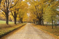 Leaves are turning yellow alongside a rural road in Peacham, Vermont Stock Image