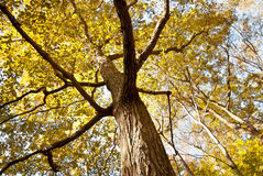 Leaves turning yellow in. Autumn in coming. Royalty Free Stock Photos