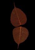 leaves två Arkivbild