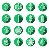 Leaves types green icons vector set. Modern flat design. Stock Photo