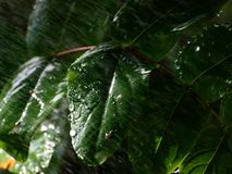 Leaves under the rain Royalty Free Stock Photography