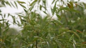 Leaves under rain stock video