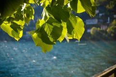 Leaves under sunrays stock photo