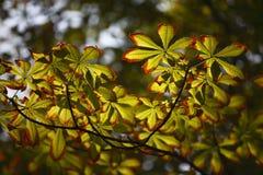 Leaves under sunshine Stock Photos