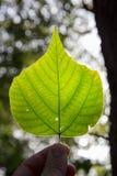 Leaves under sunshine Stock Image