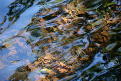 Leaves under the water. Background of leaves under the water Stock Images