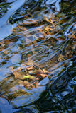 Leaves under the water. Background of leaves under the water Royalty Free Stock Photos
