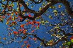 leaves utgjuter till Royaltyfri Bild