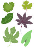 Leaves various. Illustration of some of the leaves in various colours found in my mediterranean   garden on white background Stock Photos