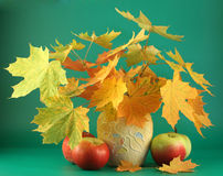Leaves in a vase and apples. Stock Photo