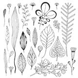 Leaves vector hand drawn collection. Cute vector illustration with sketches leaves Stock Photography