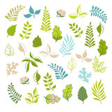 Leaves vector set. Botanical garden elements on white background. Leaves spring and summer set. Royalty Free Stock Image