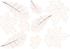 Leaves veins background illustration Royalty Free Stock Photography