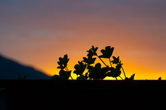 Leaves and vibrant sunset colors Stock Image