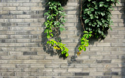 Leaves on the wall. Some leaves on the wall Stock Photo