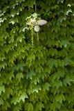 leaves wall стоковые изображения rf