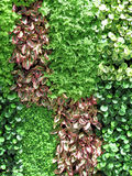 Leaves wall background Royalty Free Stock Image