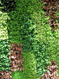Leaves wall background Royalty Free Stock Photography