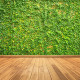 Leaves on wall and wood wall for background Royalty Free Stock Photos