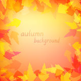 Leaves in warm colors. Autumn background with leaves in warm colors Royalty Free Stock Images