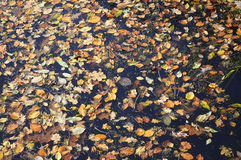 Leaves in the water Royalty Free Stock Photo