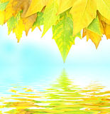 Leaves and water Royalty Free Stock Images