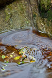 Leaves and water. Long exposure image of water and autumn leaves Royalty Free Stock Photography
