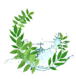 Leaves And Water Royalty Free Stock Image