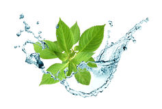 Leaves In Water Royalty Free Stock Photos