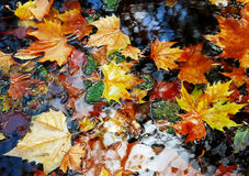 Leaves on water. Autumn leaves on water in late October royalty free stock photography