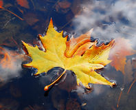 Leaves on water Royalty Free Stock Images