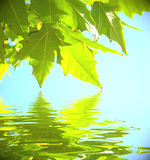 Leaves with water Royalty Free Stock Photos