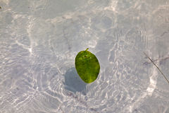 Leaves in water in beautiful composition with the sea Stock Photo