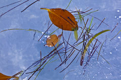 Leaves in water in beautiful composition with the sea Stock Photos
