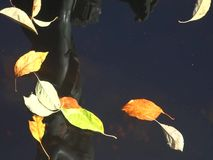 Leaves on Water stock footage