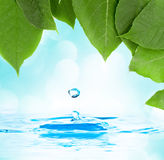 Leaves with water droplet over water reflection Royalty Free Stock Photos