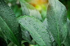 Leaves with water drops after rain. Stock Photos