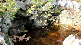Leaves in the water,HD stock video footage