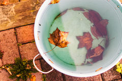Leaves in water Royalty Free Stock Photography