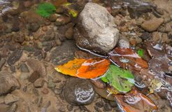Leaves in the water. The leaves in the small torrent water Stock Image