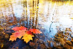 Leaves on the water surface. Detail of a few leaves on the water surface royalty free stock photo