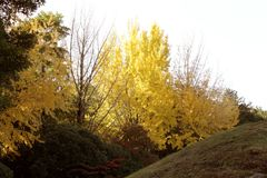Leaves were changed color when autumn Royalty Free Stock Photo