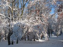 Early snowstorm covers remaining leaves on the trees. Leaves were still on the hardwood trees, when an early snowstorm covered everything in white, while Royalty Free Stock Images