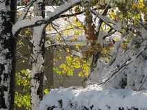 Early snowstorm covers remaining leaves on the trees. Leaves were still on the hardwood trees, when an early snowstorm covered everything in white, while Stock Images