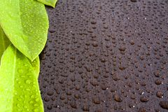 Leaves on wet  black wenge Stock Images