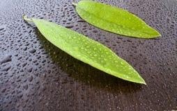Leaves on wet  black wenge Royalty Free Stock Image