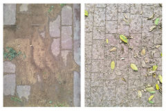 Leaves and wet soil on the pavement Royalty Free Stock Photos